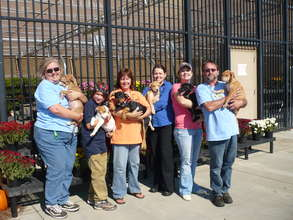 Provide Vet Care to Abandoned Animals