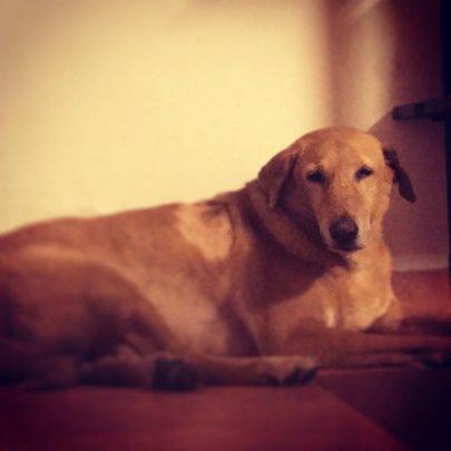 Sheru the dog