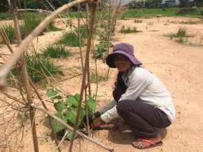 Phanny maintains her vegetable garden