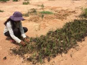 Phanny's vegetable garden is expanding