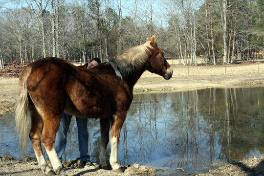 Provide Sanctuary for Severely Abused Horses