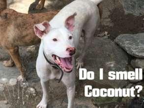 Coconut - 3-legged wild girl.