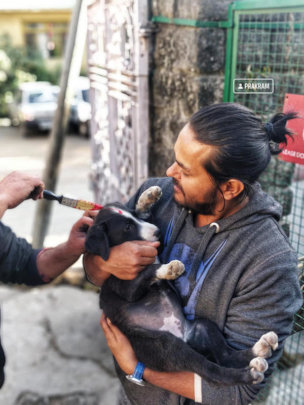 Marking a vaccinated dog helps manage population