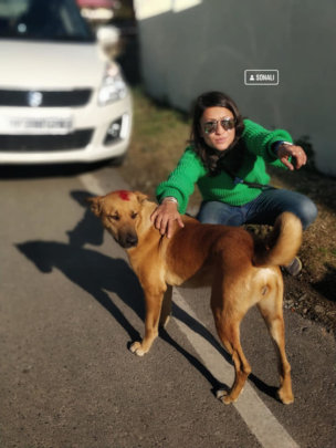 Street dogs are friendly if healthy and cared for.