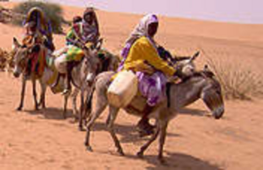 Livelihoods for Families Through Livestock, Sudan