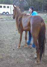 Penny, the emaciated, lonely mare.
