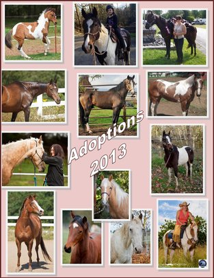 Adopted Horses 2013