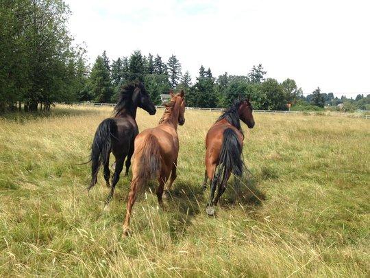 3 of the horses enjoying rehab!