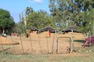 Bergnek Limpopo