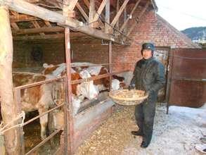 Yu Zhanjun feeds his cattle.