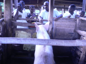 Trainees learning more about piggery managment