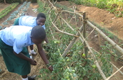 Uganda: Empowering Orphans to Become Entrepreneurs
