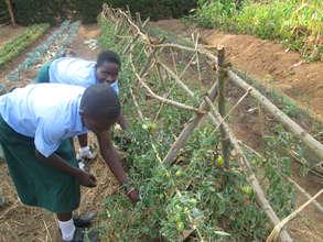 Uganda: Empowering Orphans to Become Entrepreneurs