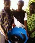 Kevin, Kehinde and Goke harvest from the farm