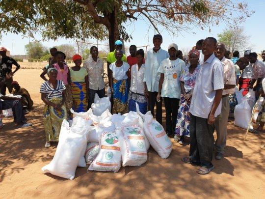 Distribution of maize - Mambova Village