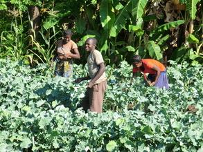 Vegetable growing at Ndele Community School