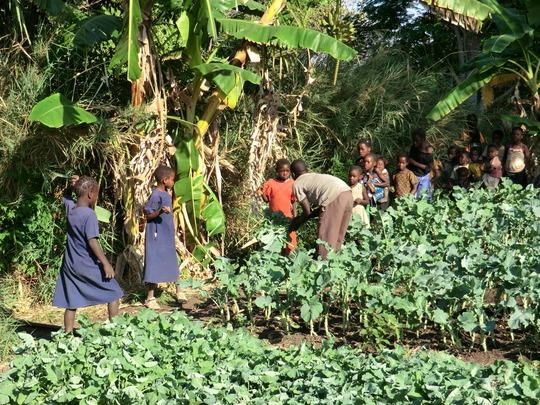Children at Ndele Village collect vegetables