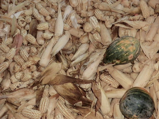 Dried maize and gourds