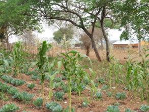 Kazungula Boarding School Garden