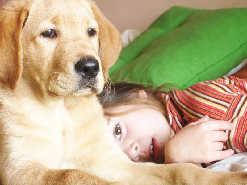 Protecting Pets in Domestic Violence Crisis