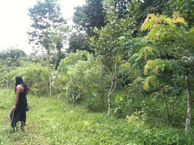 Contrast of Rio Sol corridor forest adjacent farm
