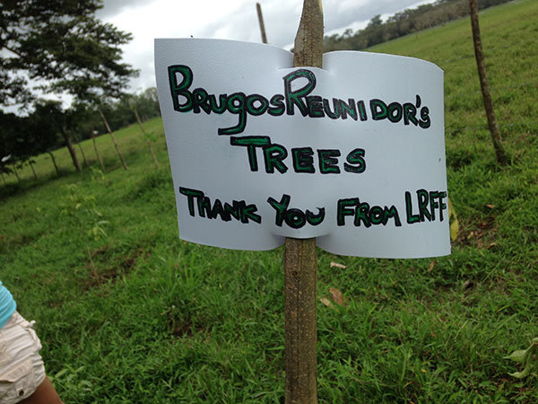 One more tree planted