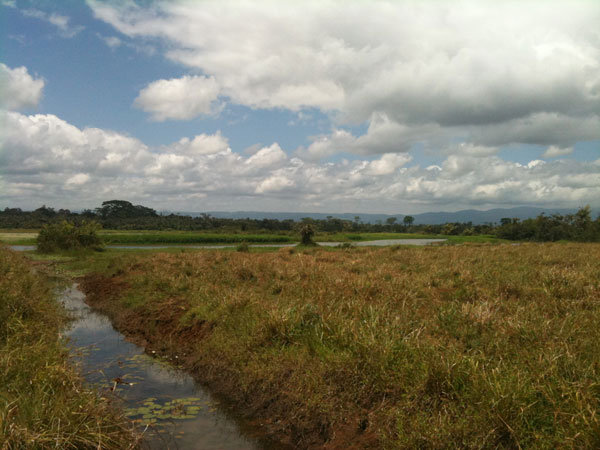 A creek leading to the wetlands from Alvaro