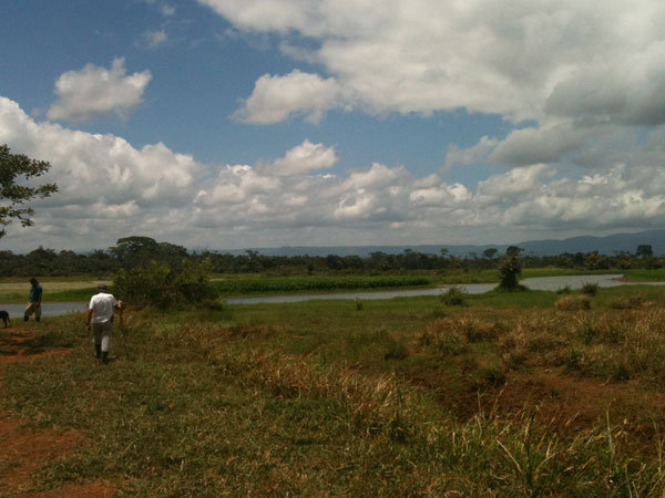 Cano Blanco wetlands, part of the restoration area