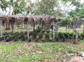 One of Elias Cruz's nursery