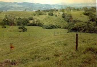 Pasture before regeneration circa 1986