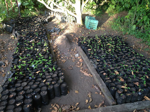 The first nursery for upcoming planting in Sept.
