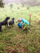 Planting your tree in Costa Rica