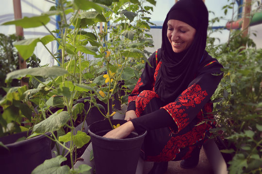 Rooftop Micro Farms for Refugee Women in Deheishe