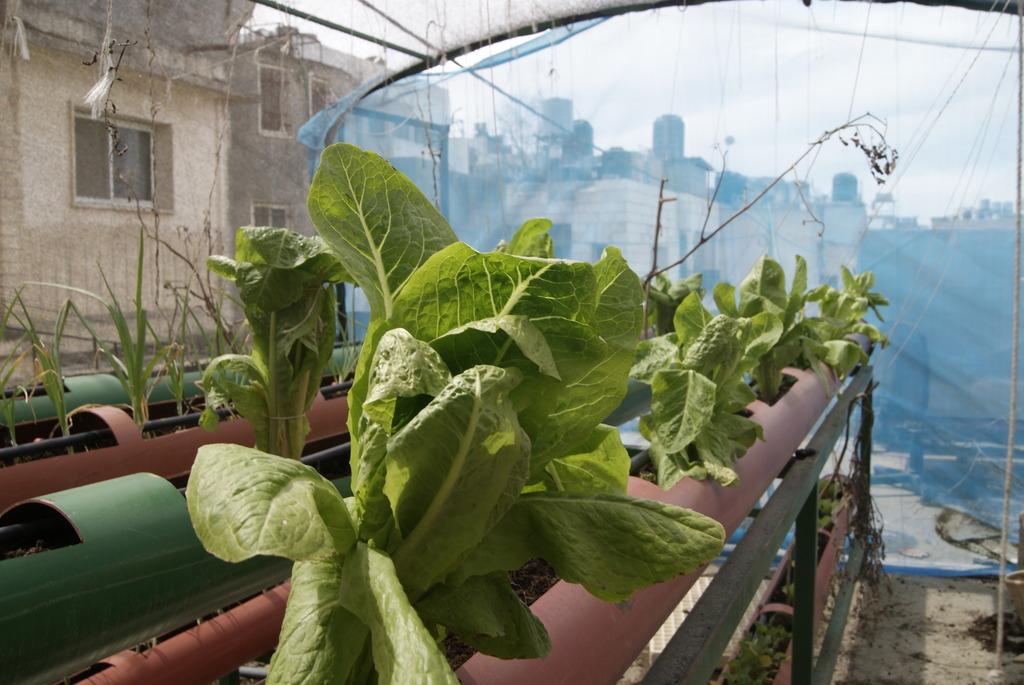 harvest rooftop gardens