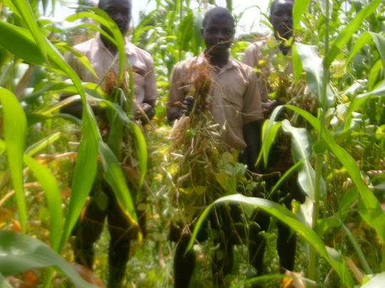 Students with Beans at Nyamwanga
