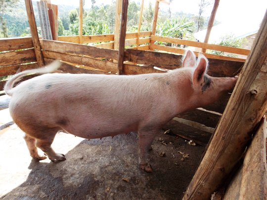 The GlobalGiving Sow