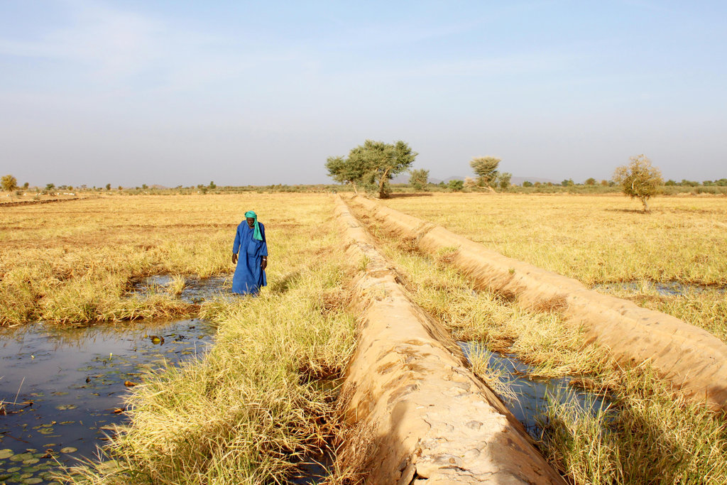 Courtesy of NEF, planting the fields in Mali