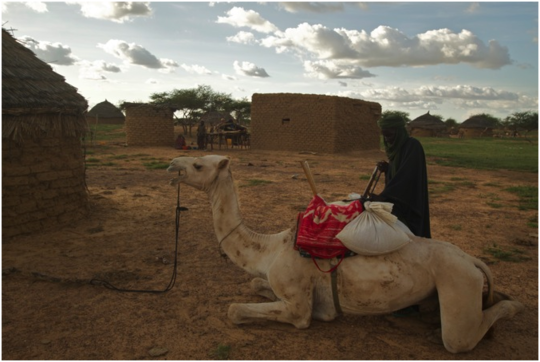 Transport via camel.