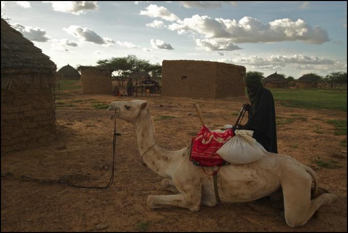 Transport via camel.