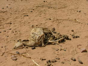 sadly, one passes many dead herd animals in bush