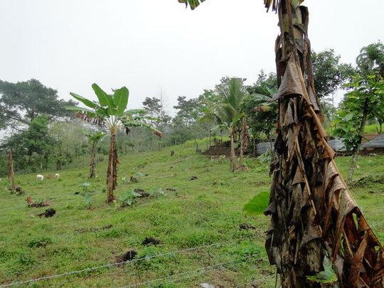 Gonzalez planting area