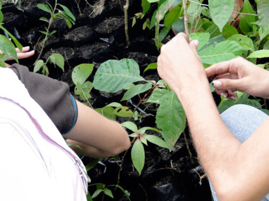 Children's hands planting trees in their nursery
