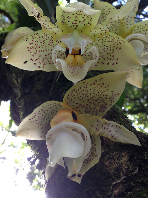 The day began with this beautiful Torito orchid