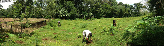 panoramic shot of the entire planting area and us