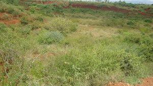 Sample from KDA tree plantation site2