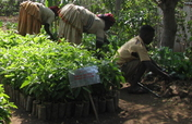 Donate Trees for Conservation & Jobs in Ethiopia