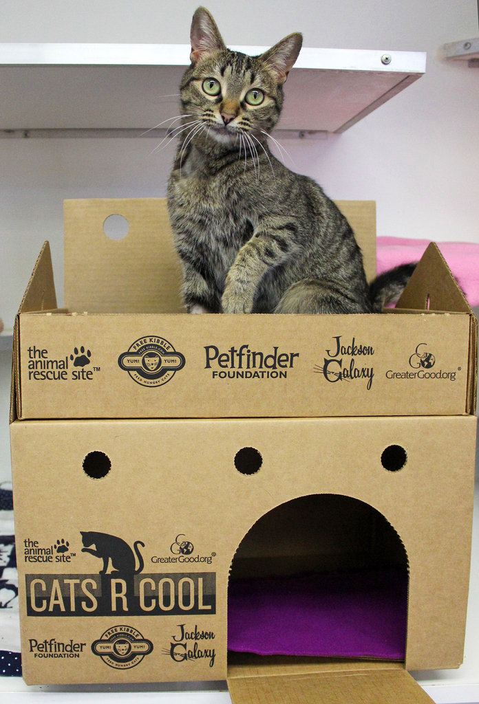 """Cat Castles include an elevated perching """"turret."""""""