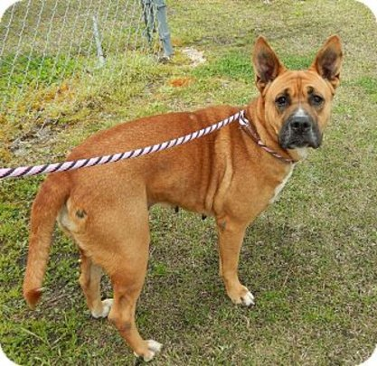 Maggie at Carteret County Humane Society