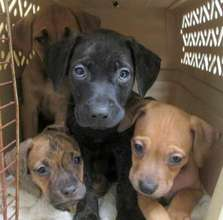 Puppies at Tails of Love in Staten Island