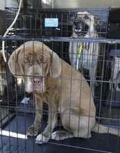 Dogs found roaming the evacuated zone